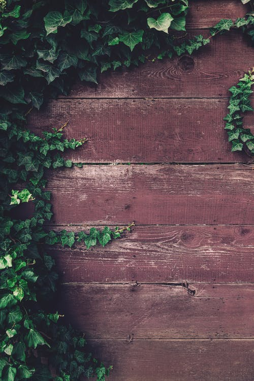 Green Plant Beside Brown Wooden Wall