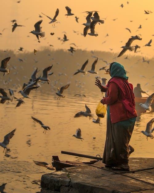 Foto stok gratis air, alam, anonim, bangsa burung