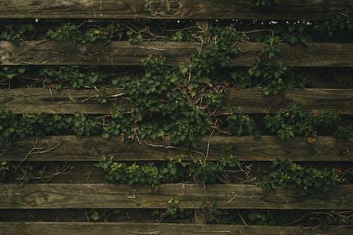 Photos gratuites de arbre, barrière, bois, clôture