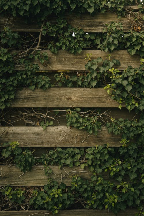 Brown Wooden Fence With Green Leaves