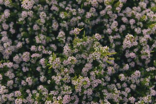 Photos gratuites de à base de plantes, aromathérapie, aromatique, botanique
