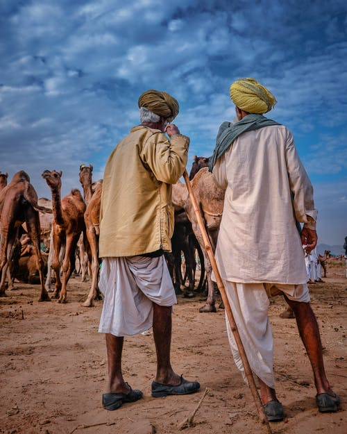 Back view of anonymous ethnic aged men wearing turbans standing in desert with camels against cloudy sky in dry terrain