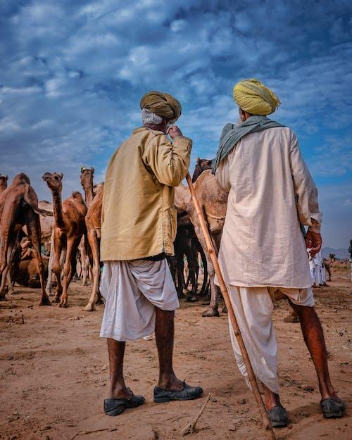 Безкоштовне стокове фото на тему «Автентичний, Анонімний, безликим, верблюд»