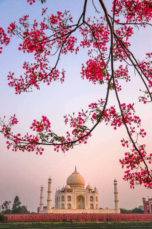 Blooming tree branch against ancient temple