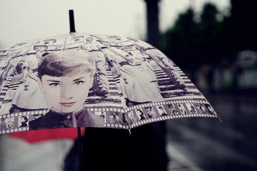 Free stock photo of rainy, rain, raindrop, beauty