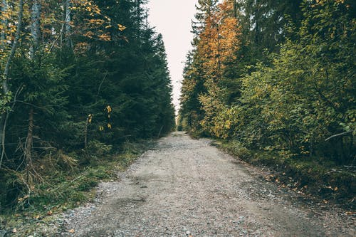 Dry road between high trees in autumn forest
