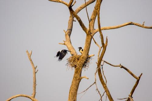 Fotos de stock gratuitas de alas, árbol, aves, cuervos