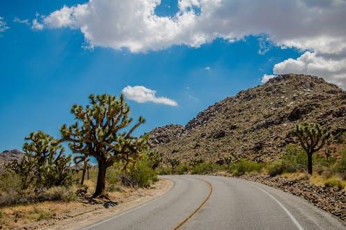 Gratis lagerfoto af bakke, bjerg, blå himmel, joshua tree
