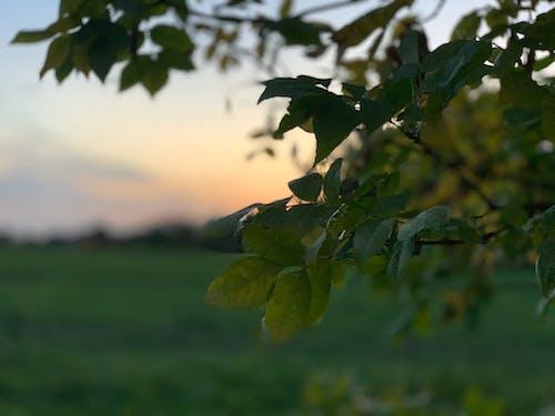 Free stock photo of осень