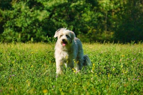 Бесплатное стоковое фото с большая собака, животное, лето