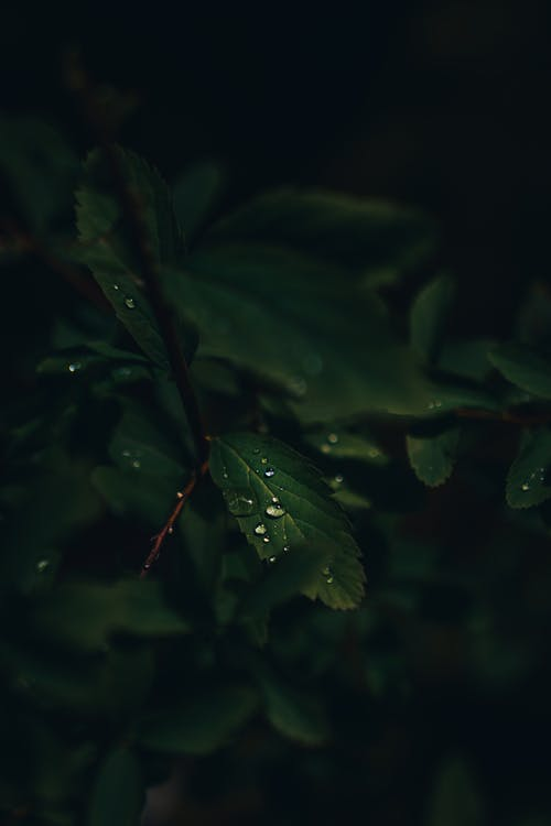 Free stock photo of green, leaves, moody