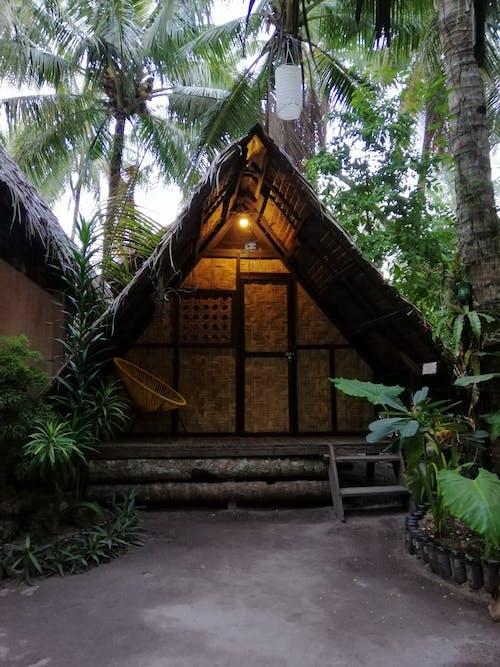 Imagine de stoc gratuită din acasă, arbore, arhitectură