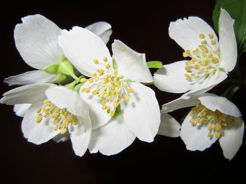 Kostnadsfri bild av blomma, blommor, flora, HD tapeter