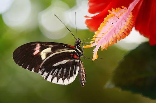 Kostnadsfri bild av fjäril, flora, insekt, makro
