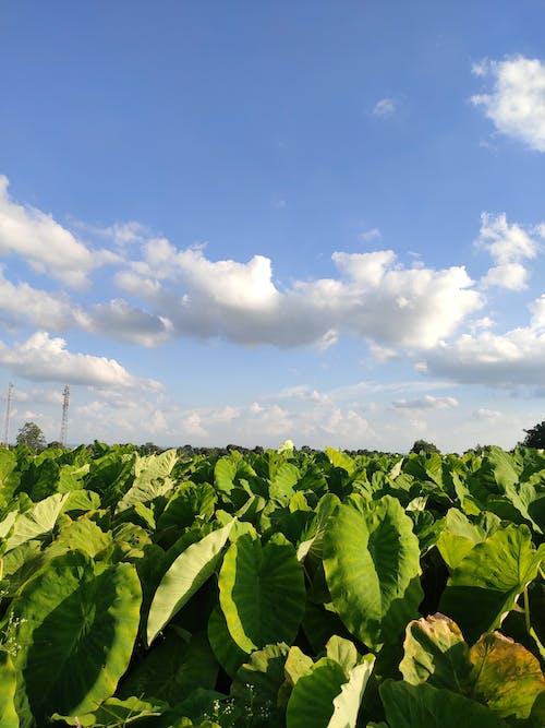 Free stock photo of farm, landscape