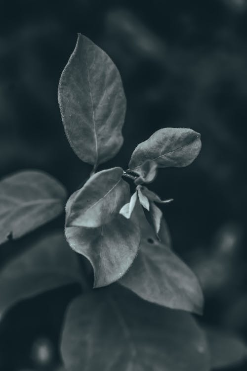 Black and white of plant with wavy thin leaves and spiky edges growing in summer park