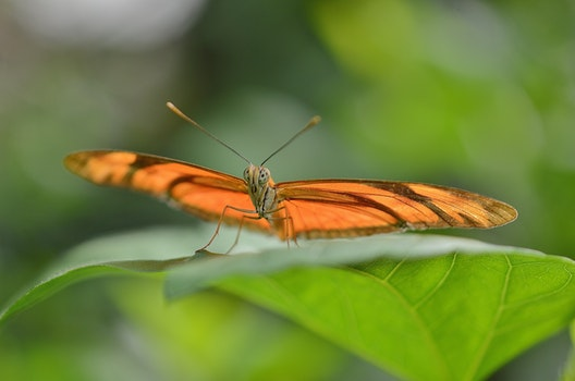 Brown Butterfly on Leaf in Macro Photography