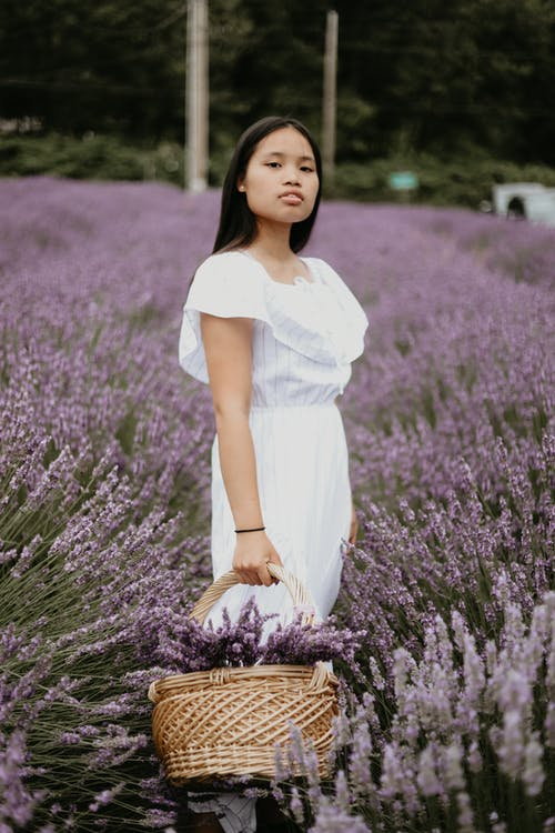 Young Asian female in summer dress holding basket with lavender flowers and standing in field while looking at camera
