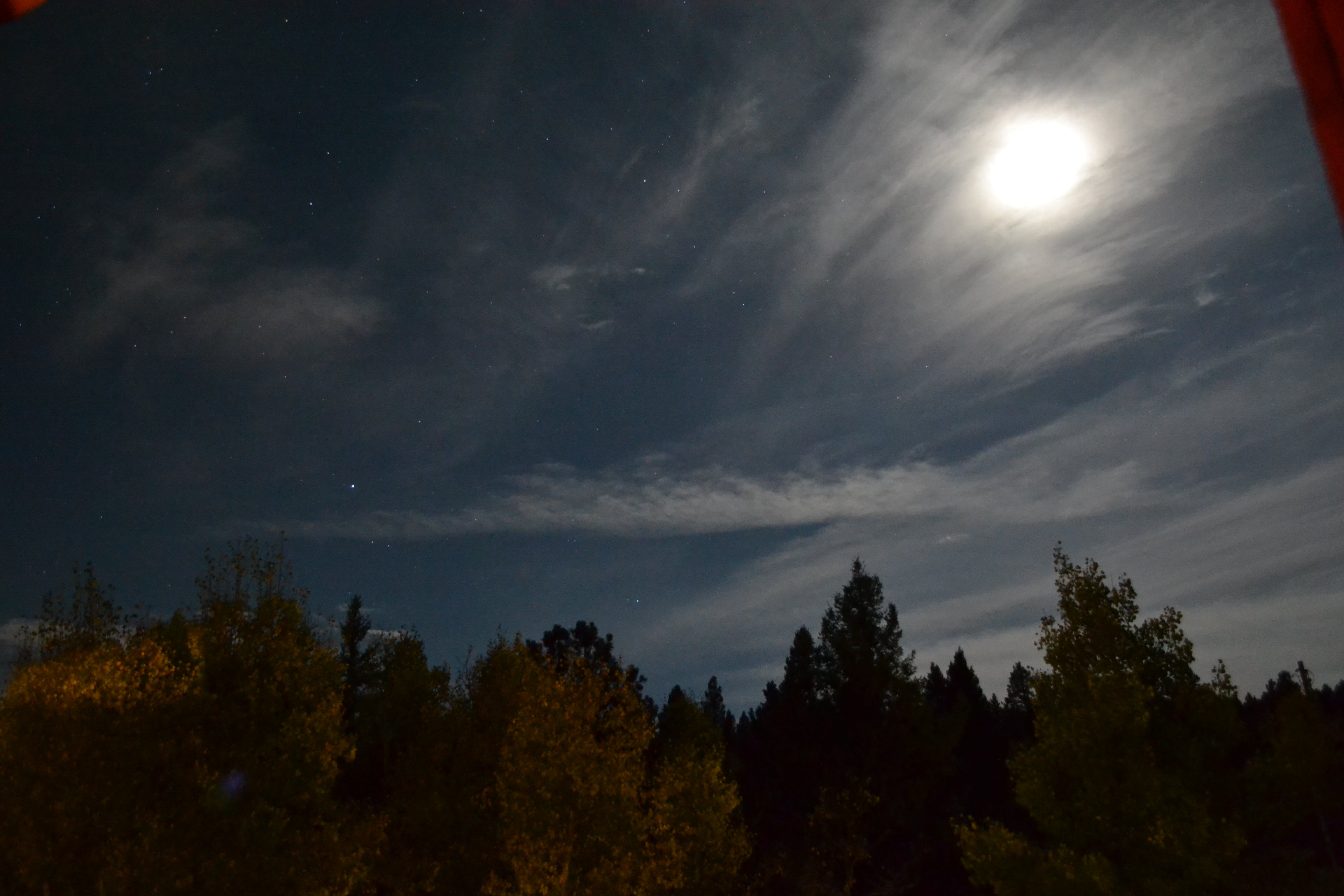 Free stock photo of night, clouds, trees, stars