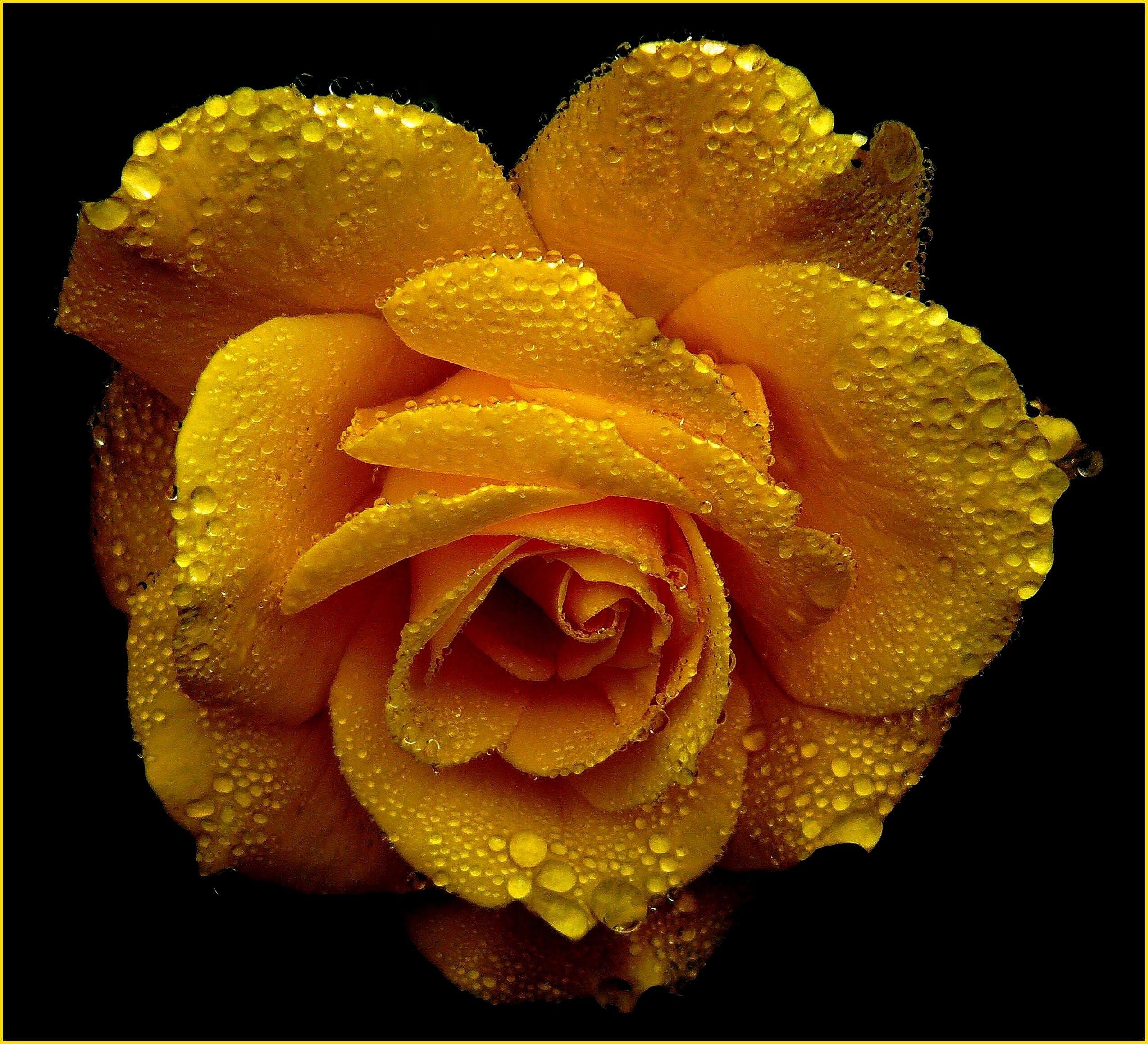 Foto profissional grátis de amarelo, atraente, broto, close