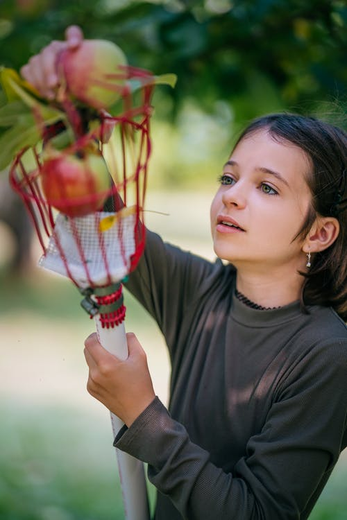 Positive girl wearing casual clothes collecting ripe apples by using fruit picker in lush garden