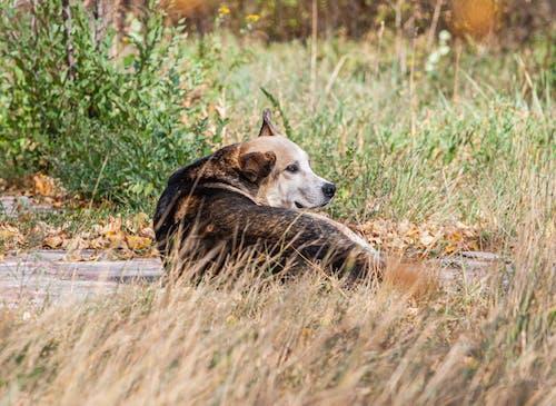 uma vida de cachorro, 一人で, 犬の無料の写真素材