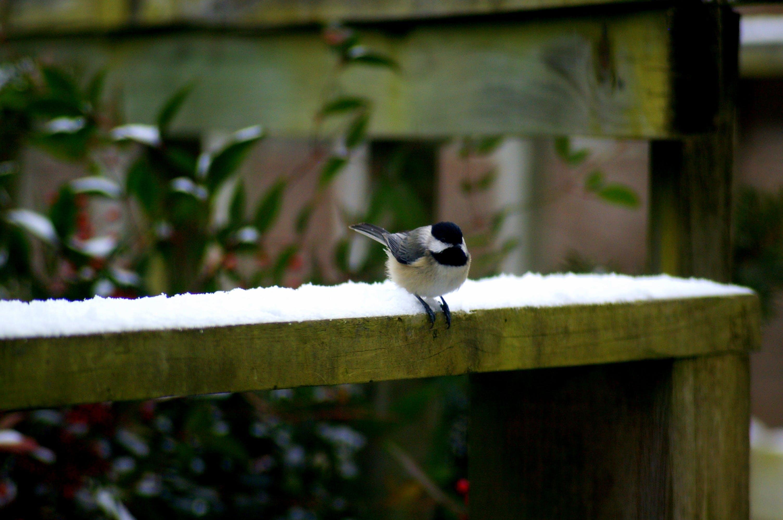 Free stock photo of snow, bird, winter, takeoff