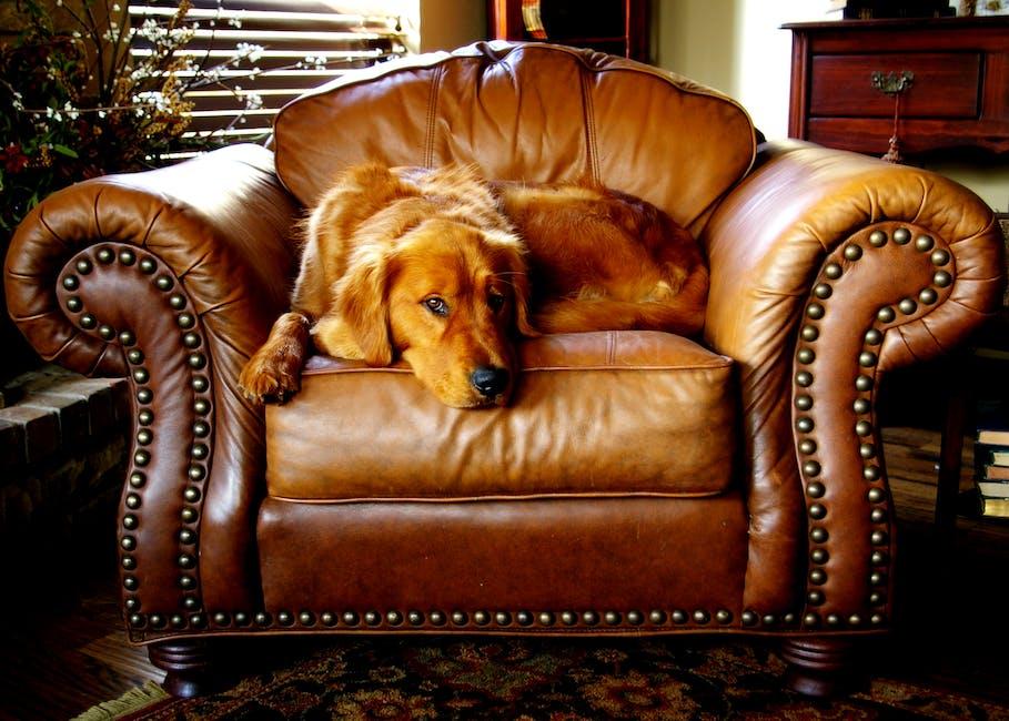 canine, chair, cushion