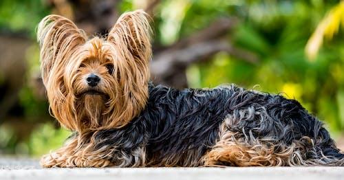 Foto d'estoc gratuïta de animal, fotografia d'animals, gos, mascota