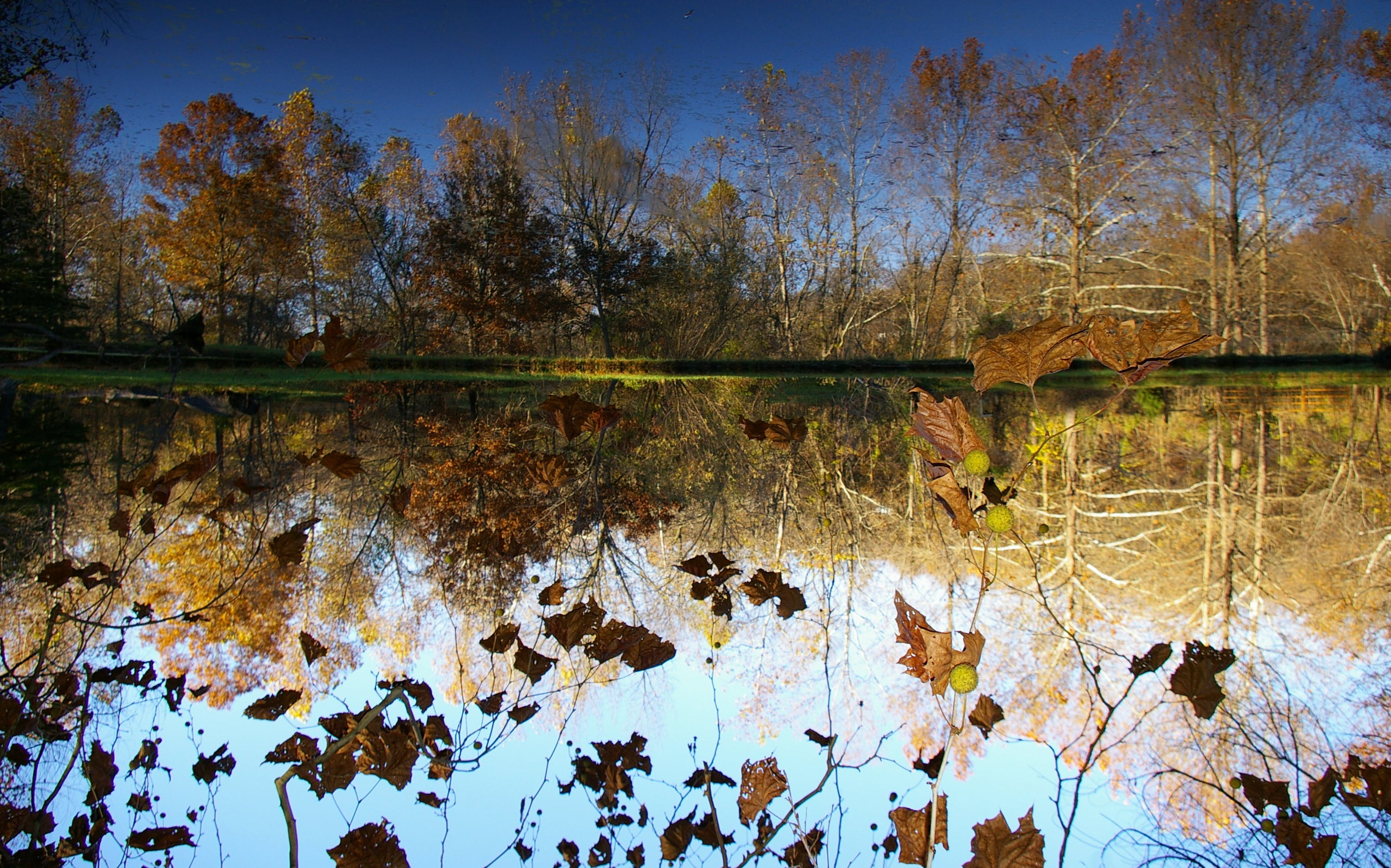 Free stock photo of tree, pond, reflection, upside down