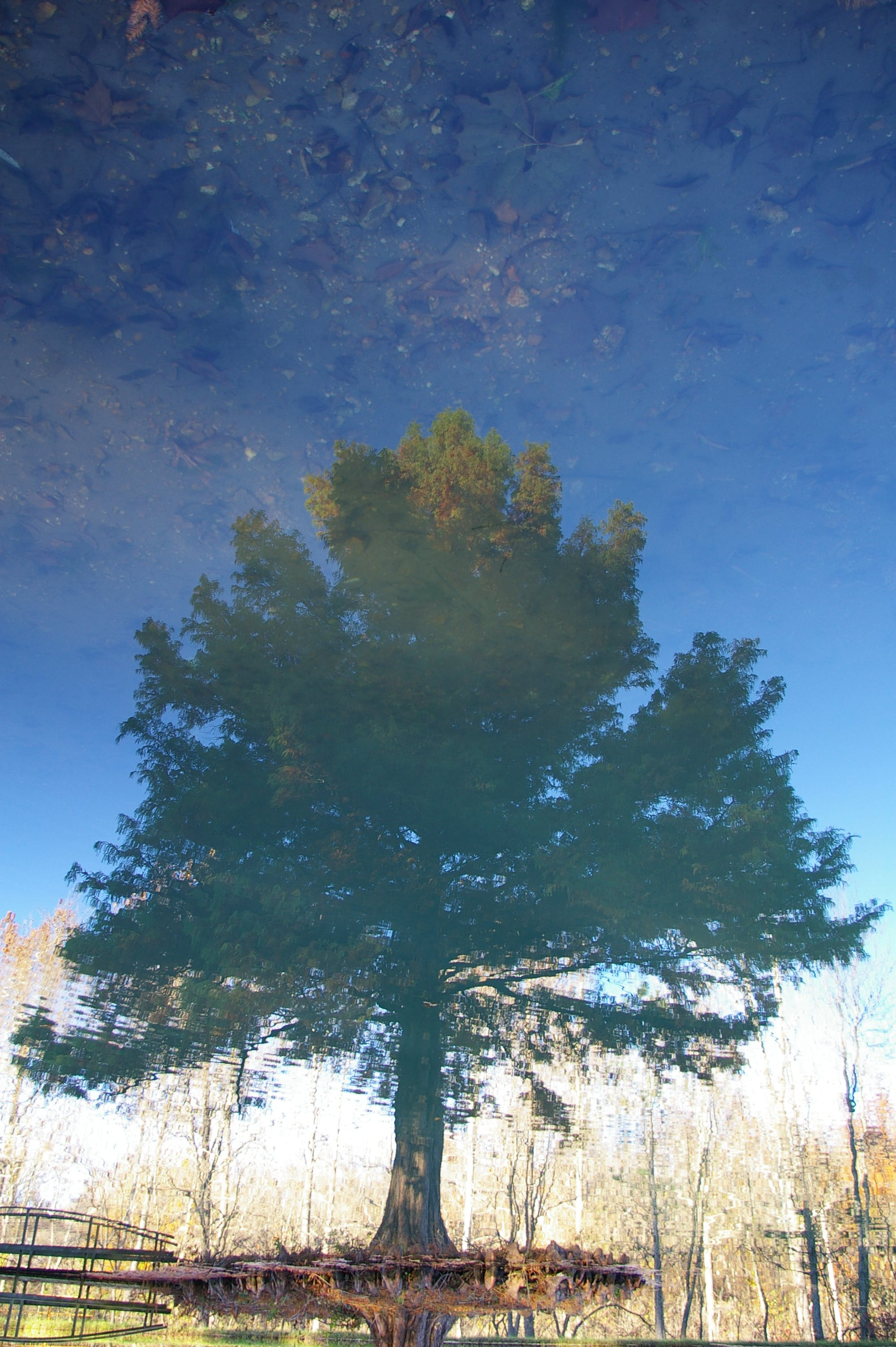 Free stock photo of alternate reality, pond, reflection, tree