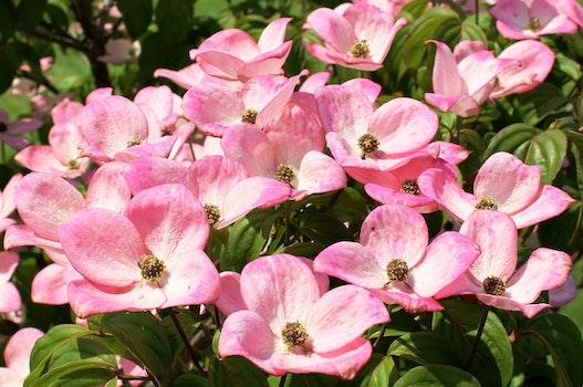 Pink Flowers Field