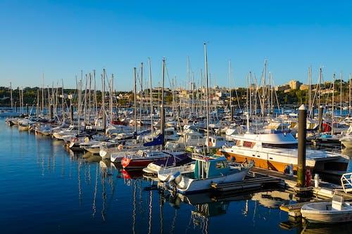 Free stock photo of marina