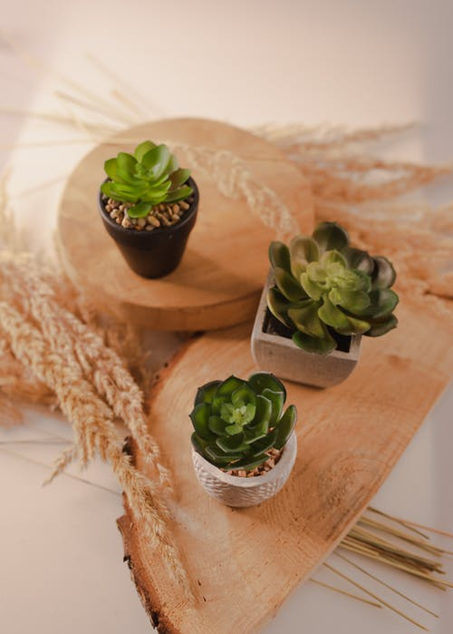From above composition of green small succulent plants in ceramic pots placed on creative wooden stand in light room
