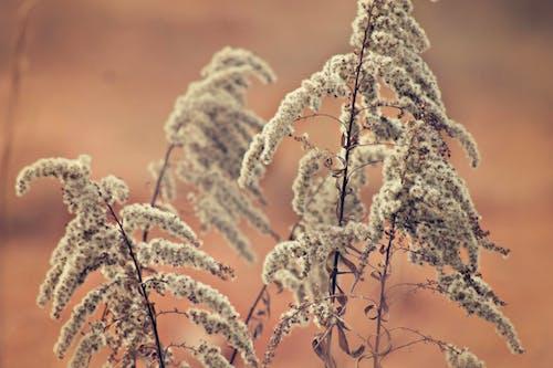 Darmowe zdjęcie z galerii z makro, roślina, zbliżenie