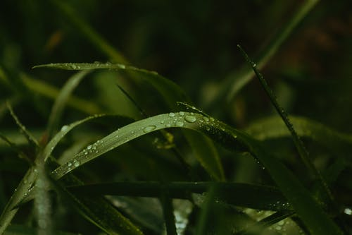Drops of dew on grass in park