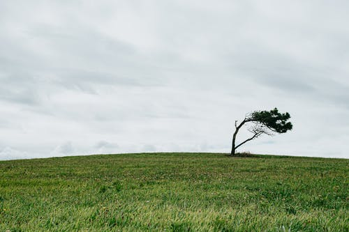Grey overcast sky covered with clouds over short solitude bent tree in big field covered with grass in daytime