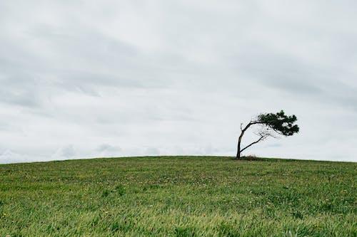Lonely tree in empty meadow