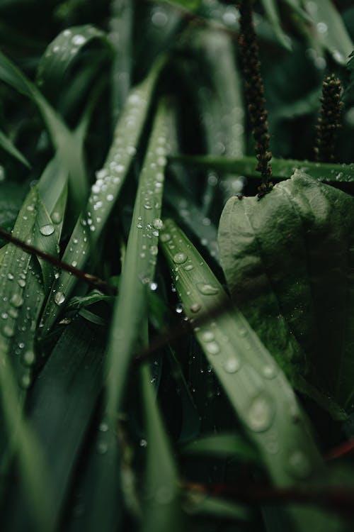 Drops of rain on grass