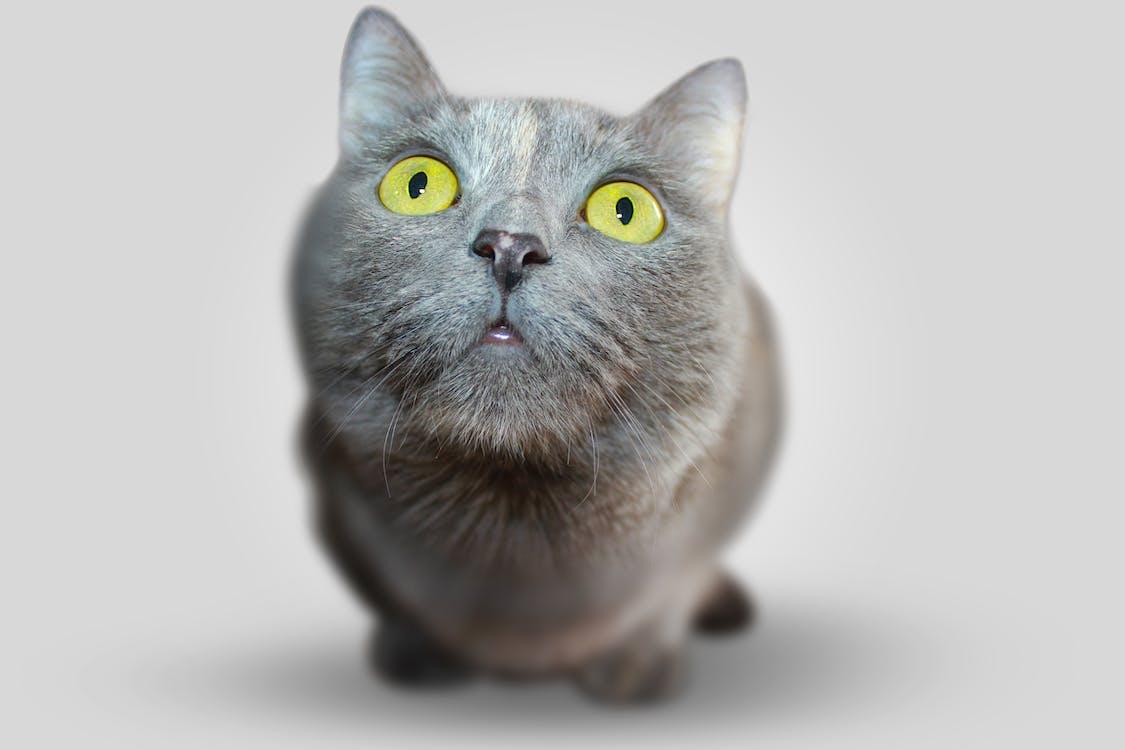 Shallow Focus of Cat Face