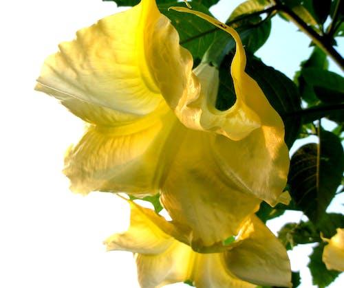 Бесплатное стоковое фото с цветок