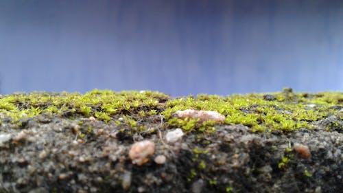 Free stock photo of grass, nature