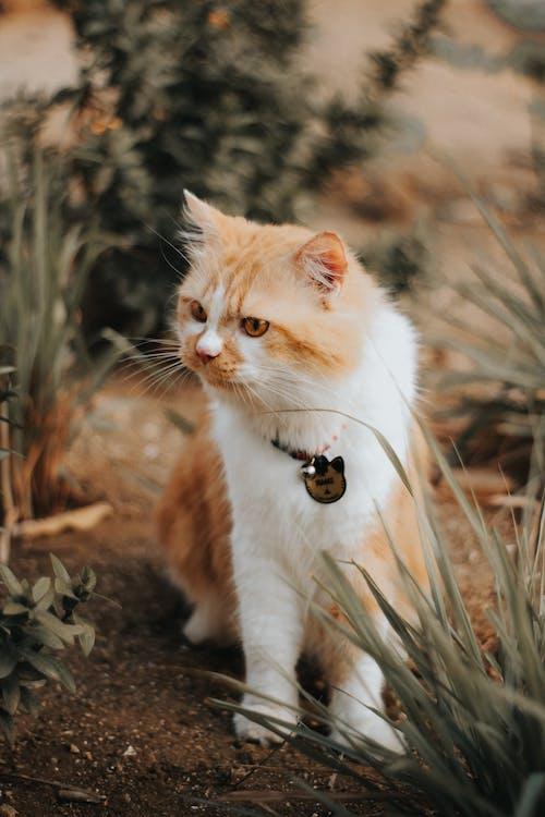 Adorable fluffy cat on shabby land in garden