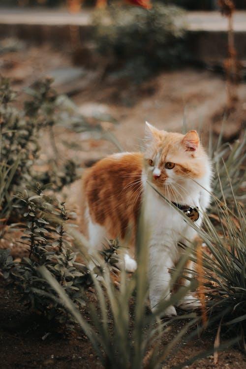 Adorable cat among plants in summer garden