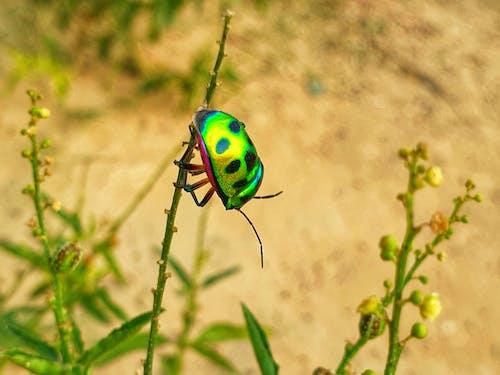 Darmowe zdjęcie z galerii z 4k, bokeh, chrząszcz
