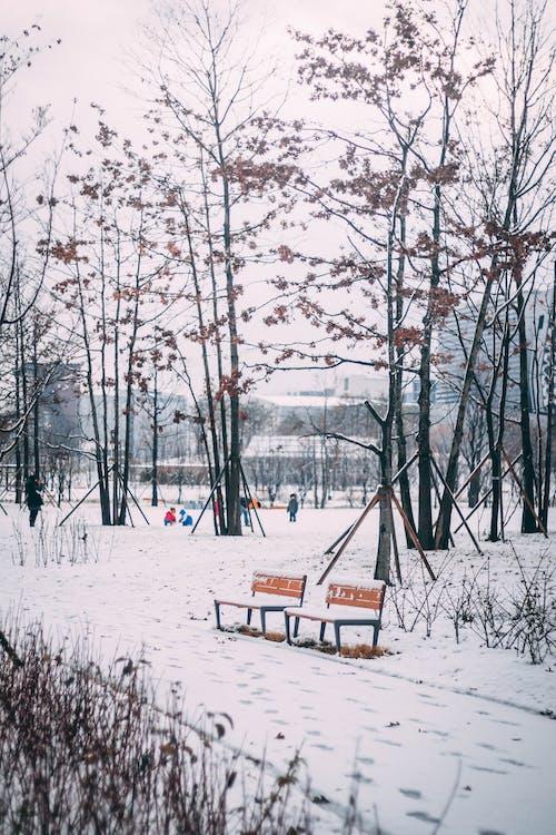 Gratis lagerfoto af bænke, forkølelse, frossen, frost
