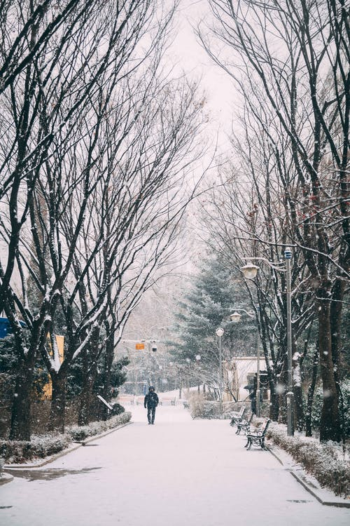 Fotobanka sbezplatnými fotkami na tému 1 muž, cesta, chladné počasie, chladný