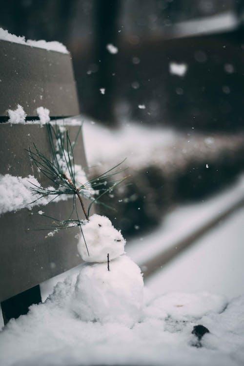 Gratis lagerfoto af folk, forkølelse, frossen, frost