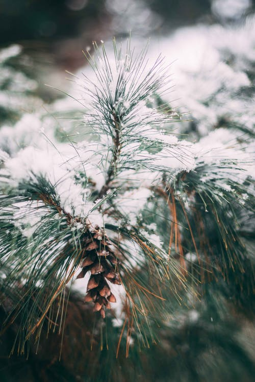 Gratis lagerfoto af detaljer, faldende sne, farverig, frost