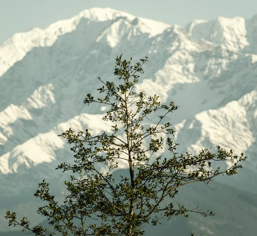 Foto stok gratis alam, gunung, himalaya, India